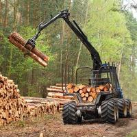 um coletor de toras de madeira limpando em uma área de floresta