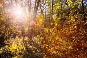 dia de sol no outono ensolarado floresta árvores. natureza madeiras, luz solar