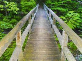 ponte da floresta foto