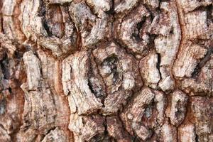 grão de casca que diferentes espécies de árvores