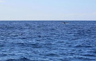 cauda de baleia foto