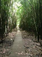 caminho de bambu