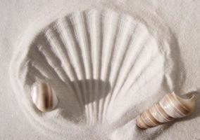 shell de impressão digital foto
