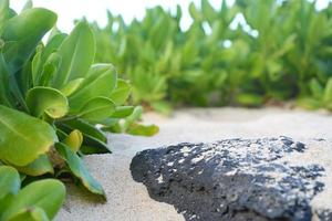 rocha de lava texturizada na praia com areia próxima planta foto