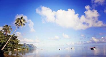 palmeiras e barcos a remo foto