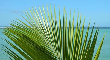 folha de palmeira na frente do oceano foto