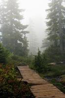 trilha de montanha enevoada
