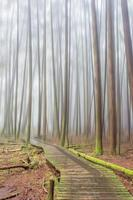 nevoeiro na floresta foto