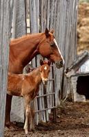 égua e potro atrás da cerca da placa