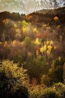 árvores da floresta colorida na temporada de outono