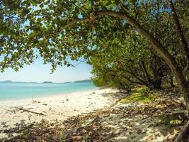 árvore com praia foto