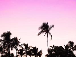 pôr do sol da ilha do Havaí foto