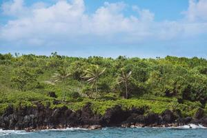 palmeiras na costa - parque estadual wai'anapanapa, maui, havaí foto