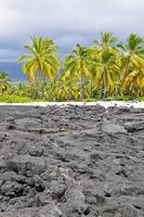 palmeiras no parque nacional pu'uhonua o honaunau (havaí) foto