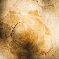 anéis de crescimento de árvores mostrados em madeira cortada foto