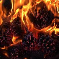 pinhas em chamas foto