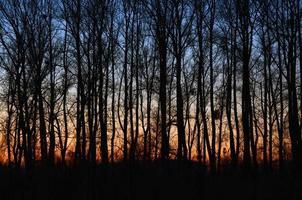 pôr do sol na floresta floresta de outono foto
