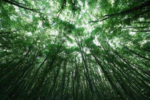 árvores da floresta. natureza verde madeira luz solar plano de fundo