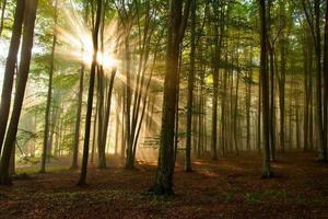 árvores da floresta de outono. natureza verde madeira luz solar fundos. foto