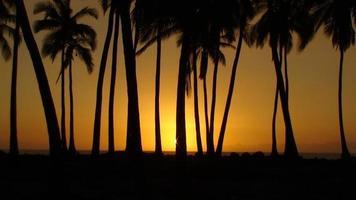 pôr do sol havaiano com palmeiras