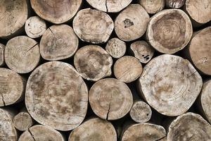 fundo de pilha de toras de madeira real foto