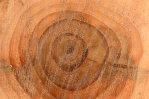 toras de madeira foto