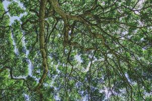 galhos de árvores no Havaí