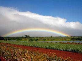 arco-íris na plantação de dole foto