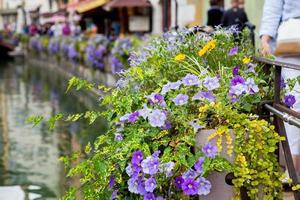vasos de flores bonitas ao longo dos canais em annecy, frança, conhecido foto