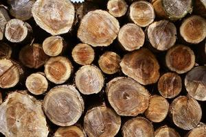 anel de árvore de madeira derrubada