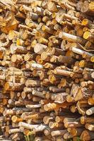 pilha de troncos de árvore