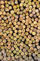 seção da madeira circular