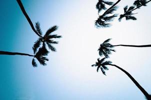 palmeiras com fundo azul céu foto