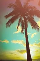 palmeira havaiana com estilo retrô foto