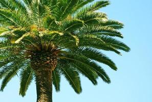 palmeira e céu azul foto