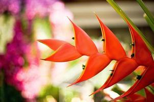 guindaste flor ou ave do paraíso foto