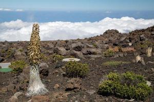 eua - havaí - maui, parque nacional de haleakala