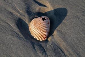 concha do mar quebrado foto