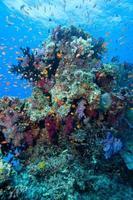 fiji subaquático foto