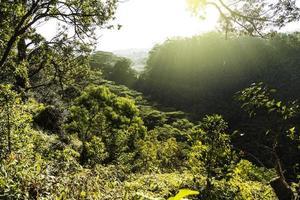 ao longo da trilha de waikomoi em maui ao nascer do sol