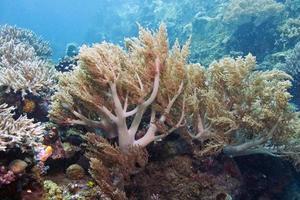 bunaken parque marinho nacional.indonésia foto