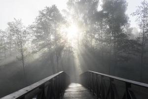 paisagem nebulosa com ponte velha e silhueta da árvore