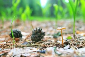 textura musgo líquen macro cogumelo foto