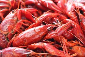 lagosta cozida, partido clayfish foto