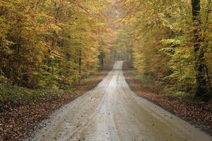 estrada de cascalho em uma floresta de faias outono