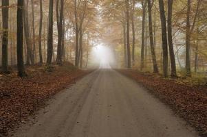 estrada de cascalho em uma floresta de faias enevoada