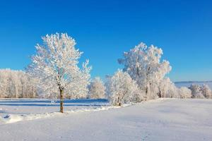 geada coberta de árvores na paisagem de neve foto