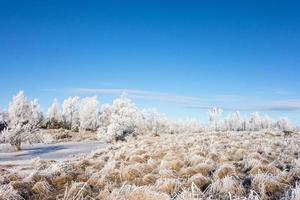 charneca congelada foto