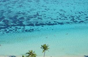 palmeiras e um recife de coral