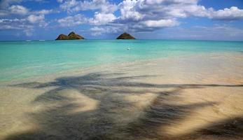 praia de lanikai - vista debaixo da palmeira foto